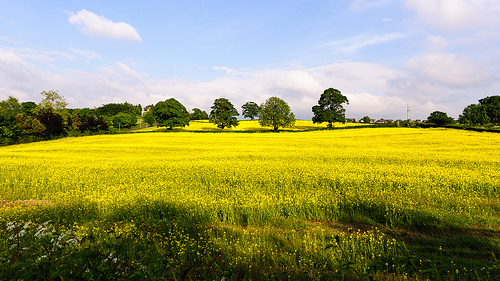 La biomasa vegetal como sustituto del petróleo