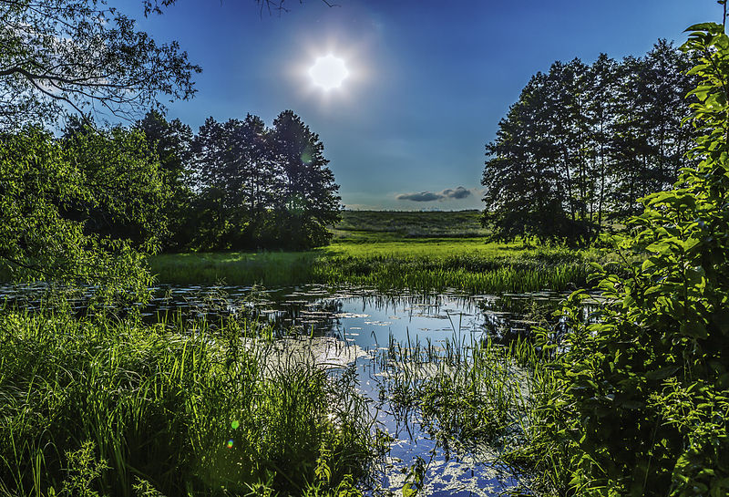 800px-Nature_landscape_ukraine_poltava_(8093168012)