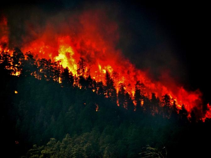 Cuando los bosques arden