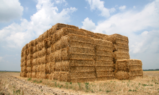 straw_bales_in_tippecanoe_county_indiana