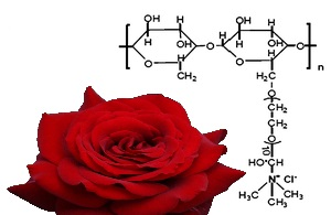 cationic rose
